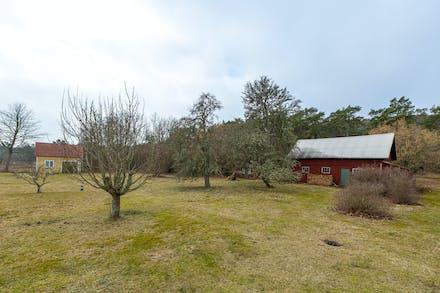 Gårdsbilden med uppväxta äppel- och päronträd