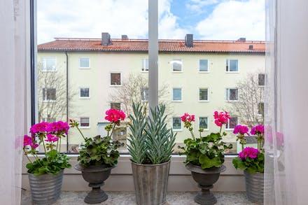 Köksfönster där blommorna trivs