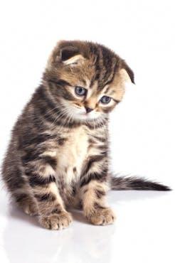 Få bort kattkiss lukt
